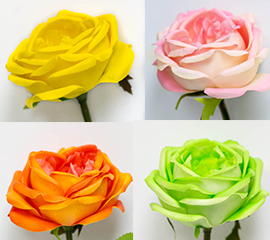english rose open color chart