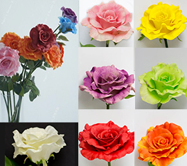 cabbage roses color chart