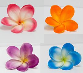 plumeria frangipani color chart