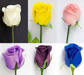 rosebud color chart